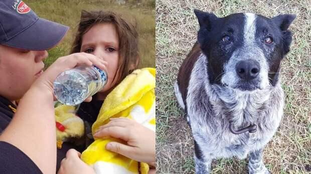 Старый глухой пес17 часов охранял потерявшуюся 3-летнюю девочку
