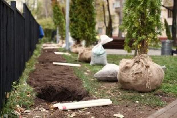Для озеленения улиц в Выхине-Жулебине планируют использовать крупномеры