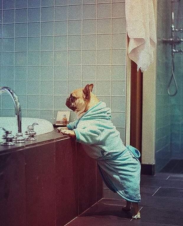 Кате Варнаве очень смешно!) Её трогательный пёс покоряет стул и ждёт перемен у окна…
