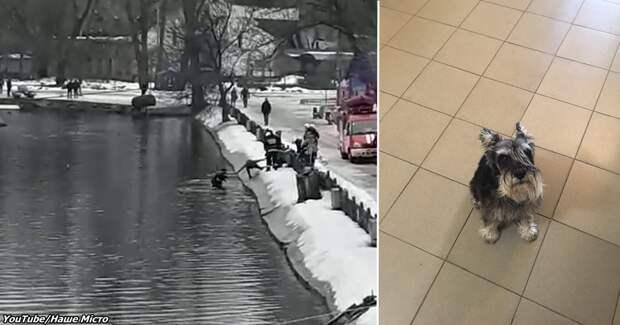 Мужчина спас собаку, которая тонула в ледяной воде. Вот видео, как это было