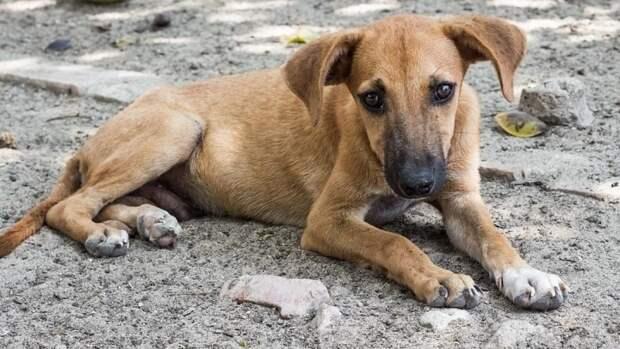 Волонтеры помогут найти новый дом для собак погибшей Кристины Журавлевой