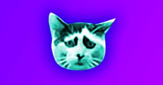 4 фото самого грустного кота на свете, из которого надо сделать мем