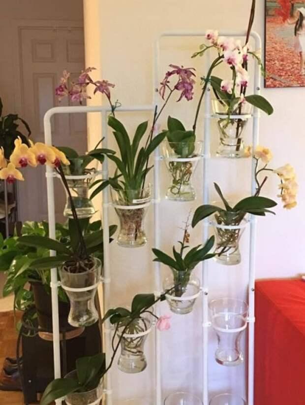 Самый простой способ выращивания орхидеи в воде