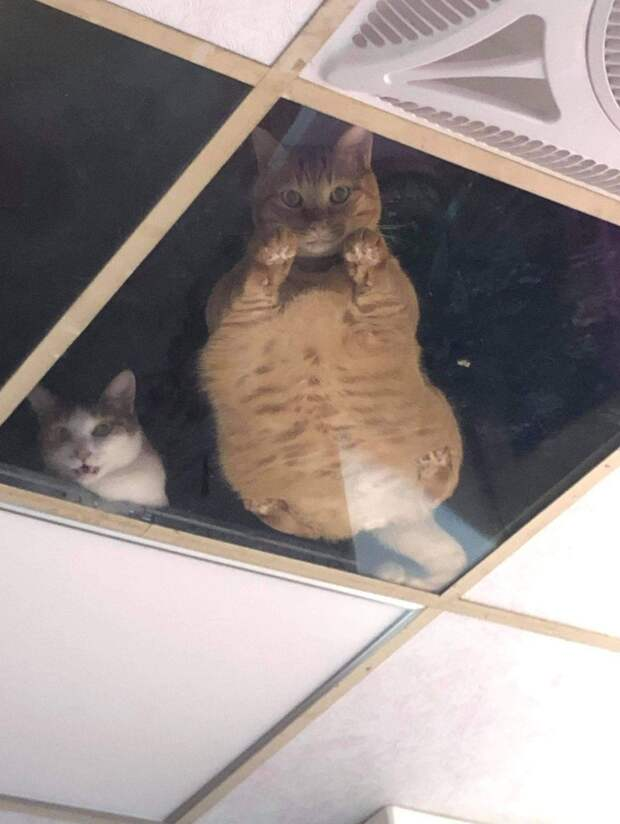 18 примеров, что коту пофик где спать! Даже там, где прилечь человеку и в голову не придет