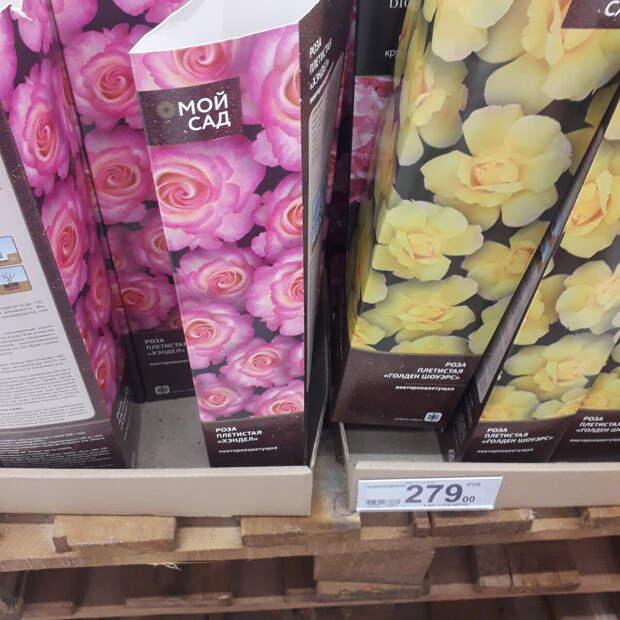 Сравнила цены на саженцы и луковицы цветов в АШАНе и ОБИ. Много фото.