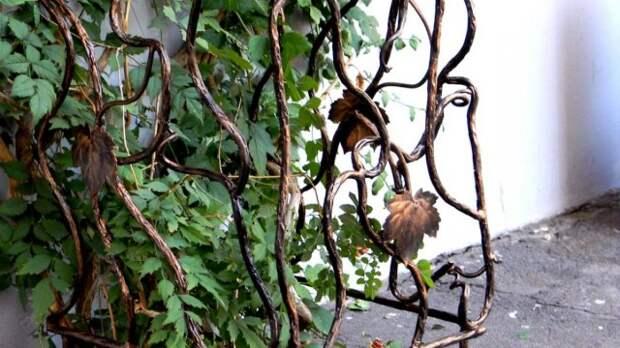 Кованые опоры для лиан в саду