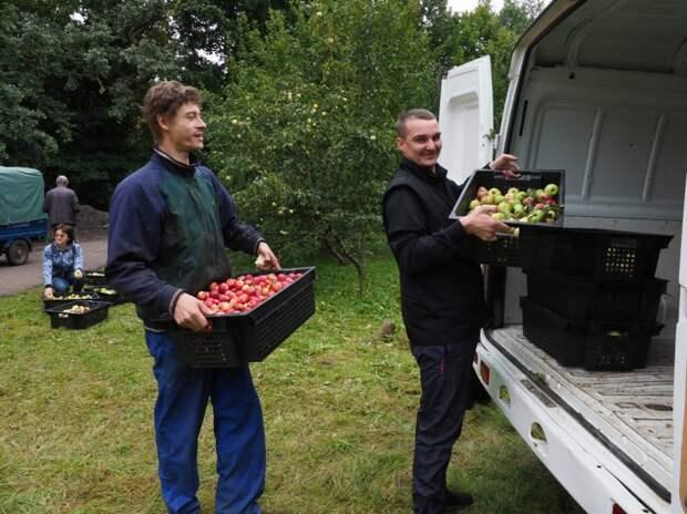 Детские дома получат в подарок две тонны яблок из СВАО