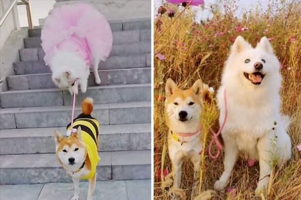 Эта собачка лишилась зрения. Но теперь у нее есть своя собака-поводырь и лучшая подруга!