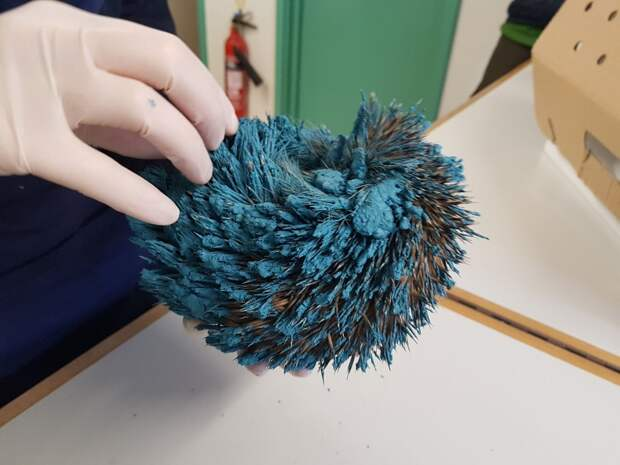 Что за синий шар в саду? Его рассмотрели, отмыли, а он… зашевелился!