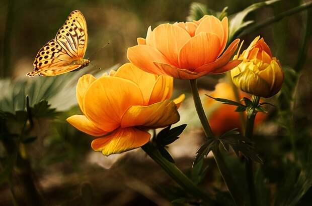 Цветы/ Фото: pixabay.com