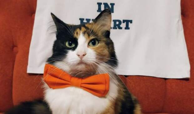 Жительница Украины выдвинула свою кошку в мэры города