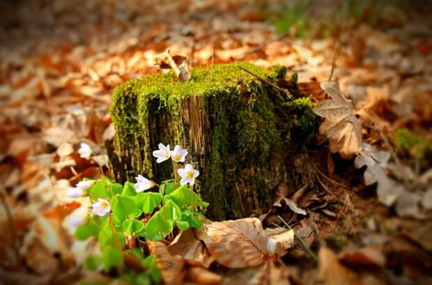 В Симферополе спилят 276 деревьев