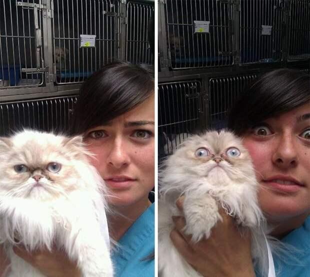 коты у ветеринара, кошка у ветеринара, смешные коты