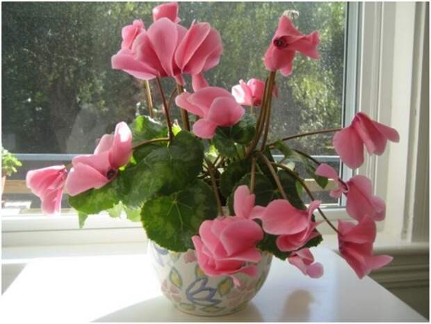 Цветы для спальни: на что обратить внимание при выборе (35 фото)