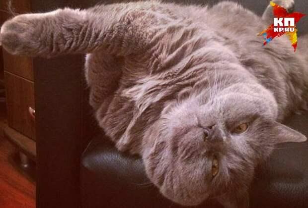 Зооспасатель Евгений Зенков вытащил из канализации кота, который просидел там почти неделю