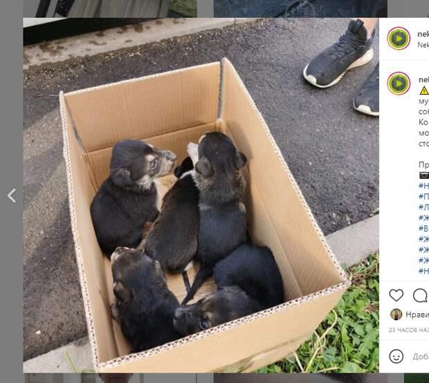 Брошенных на мусорке в Некрасовке щенят уже разобрали