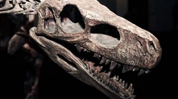 Ученые обнаружили вид динозавров размером с курицу