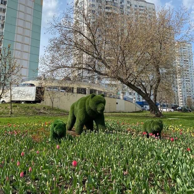 Фото дня: медведи на Заповедной в окружении тюльпанов