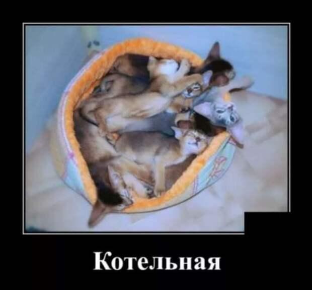 Демотиваторы про коронавирус с надписями. Подборка chert-poberi-dem-koronavirus-chert-poberi-dem-koronavirus-44120625062020-15 картинка chert-poberi-dem-koronavirus-44120625062020-15