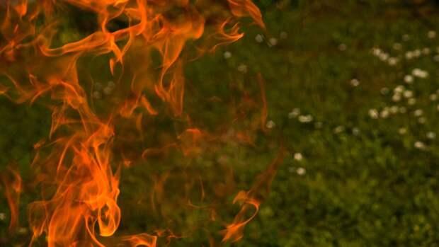 Стали известны масштабы лесного пожара в Тюменской области