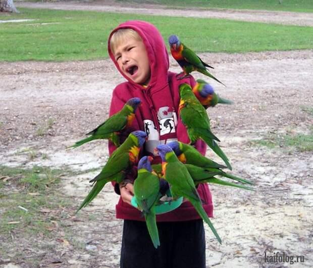 Фото птиц (70 фото)