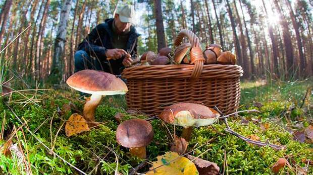 Россиян ждут штрафы за сбор грибов и ягод