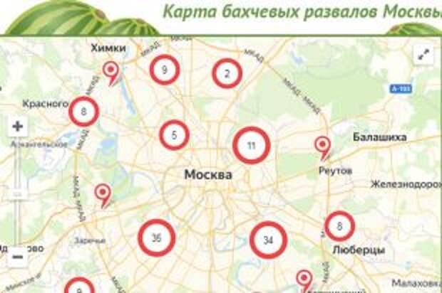 Где купить арбузы и дыни в Москве в 2020 году? Инфографика