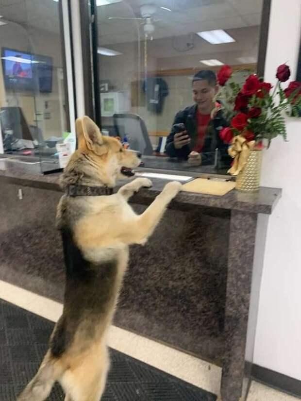 «Помогите мне, я потерялся!» Пёс сам пришёл к полицейским, но не дождался помощи и убежал