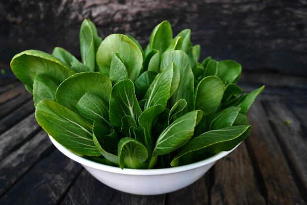Листья пак-чой - кладезь витаминов и минералов