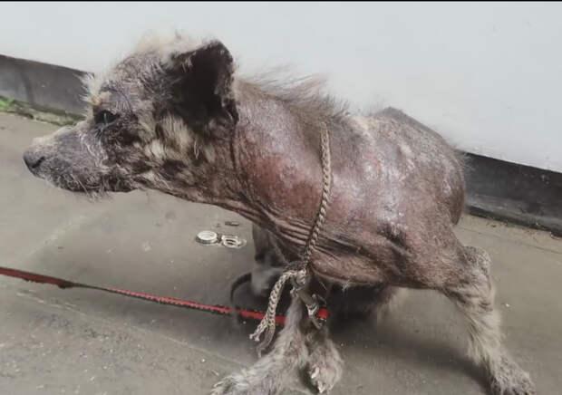 Его нашли в таком состоянии, что ветеринары лишь развели руками