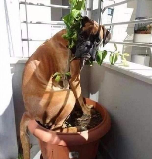 10 собак, которые достигли совершенства в искусстве маскировки
