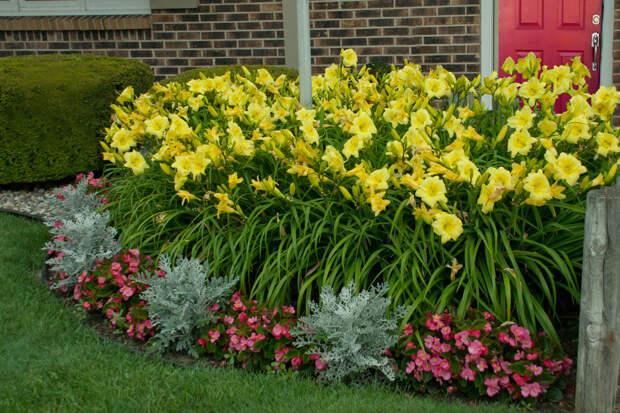 Многолетний садовый цветок Лилейник (Hemerocallis)