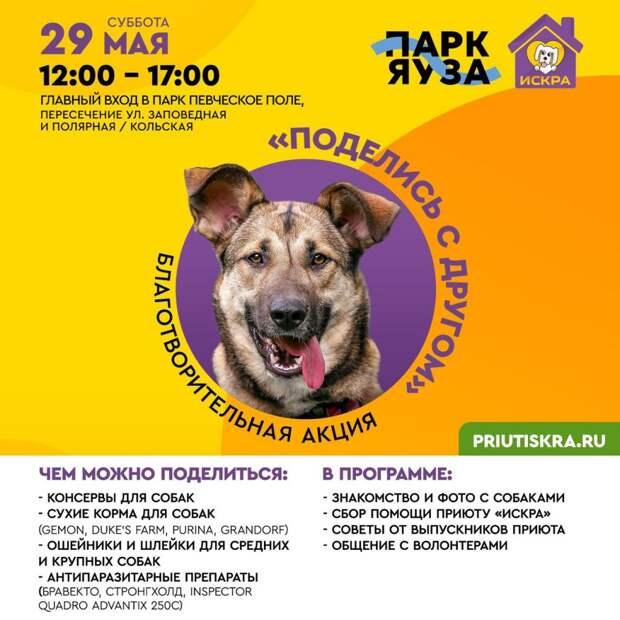 Благотворительная акция в поддержку приюта для животных пройдет в парке «Яуза»