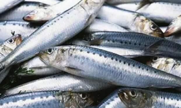 Россия оставила Японию без Курил, а теперь еще и без рыбы