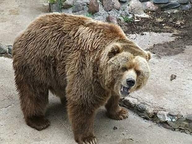 Эксперт дала советы по выживанию при встрече с дикими животными
