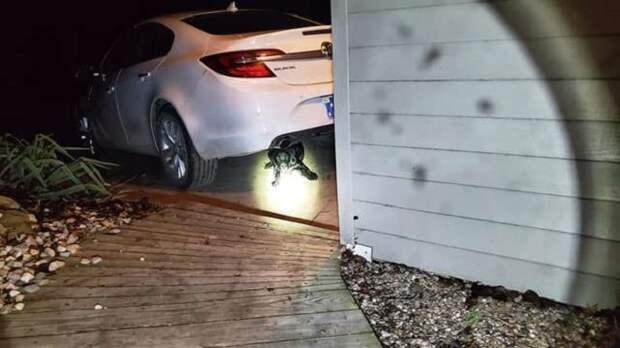 Щенок под машиной