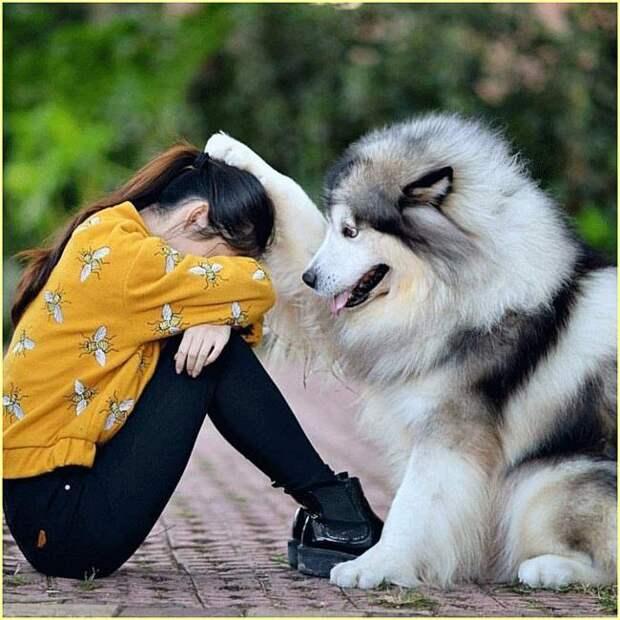 Cмешные и трогательные фото животных