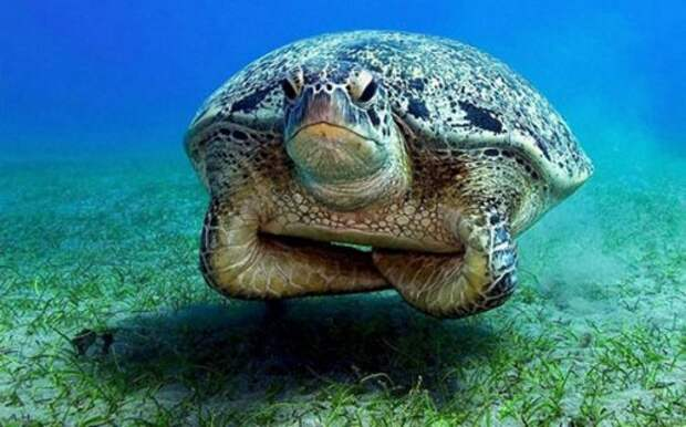 Замечательные животные, чьи сердитые мордочки вызовут у вас улыбку (29 фото)