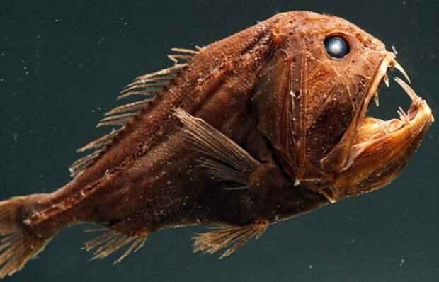 Подводные чудовища. Какие тайны хранят океанские глубины?