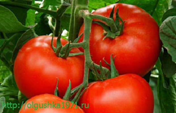 Новые сорта томатов на 2016 год. Самые лучшие и урожайные, для теплиц и открытого грунта, для Подмосковья и Сибири