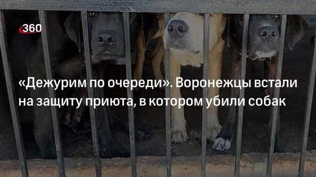 Владелец приюта в Воронеже Шамарин: собак убивали демонстративно
