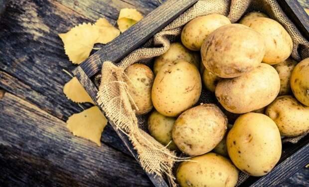 Как получить два урожая молодой картошки в средней полосе
