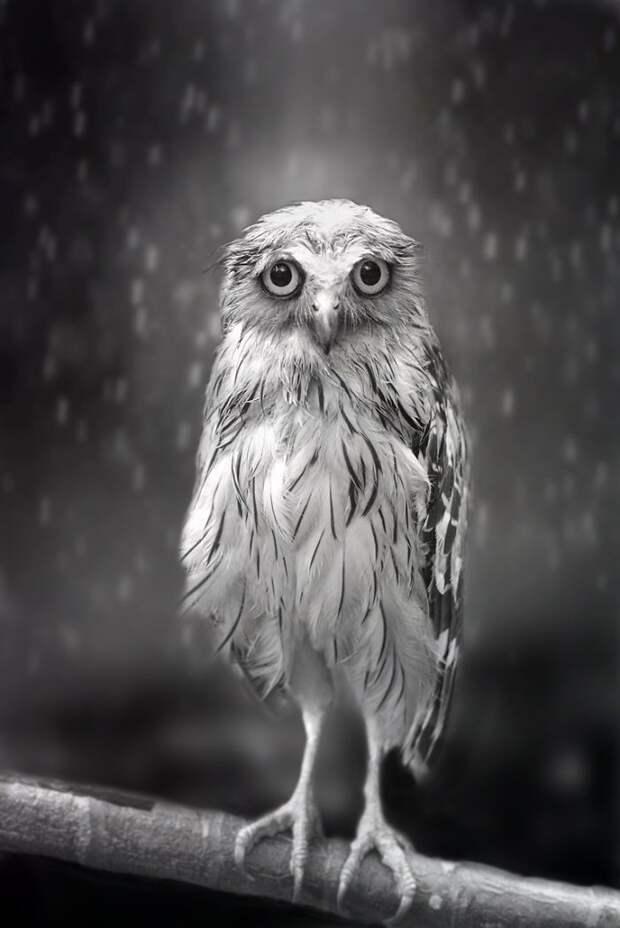 Промокла под дождем дикая природа, красиво, мир, планета, природа, птицы, совы, фото