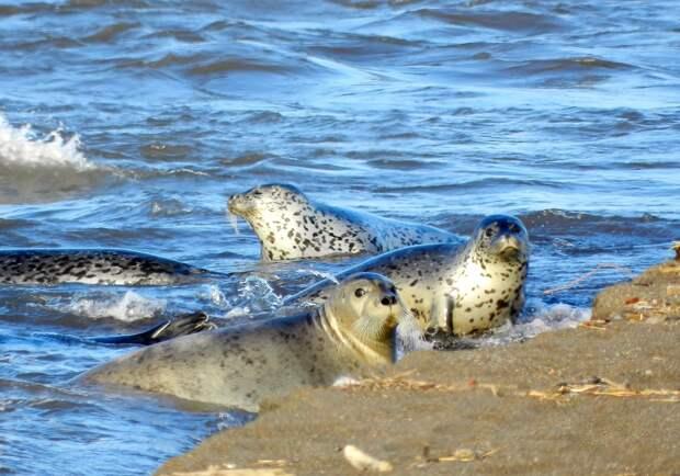 Экологическая катастрофа на Камчатке: мнения экспертов