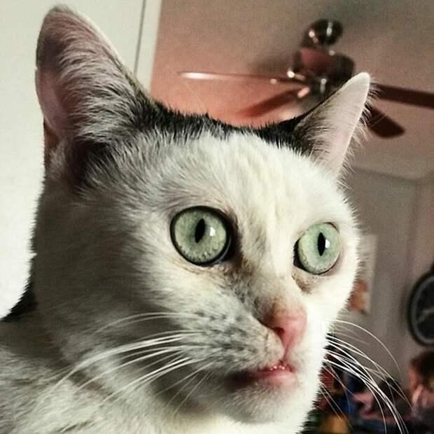 Внешность Марлы немного ее шокировала, но одновременно и заинтересовала Стив Бушеми, забавно, забавное сходство, кошка, напоминает, необычная внешность, необычная морда, сходство