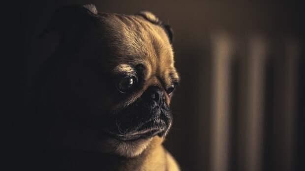 Ученые доказали способность собак распознавать неправду
