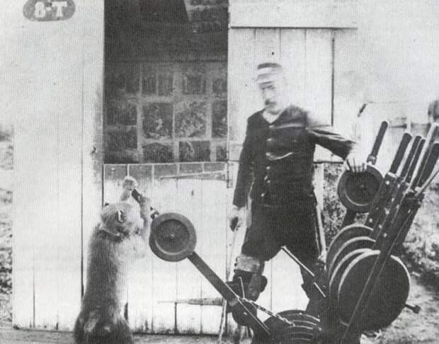 «Сигнальщик Джек». Как бабуин работал на железной дороге