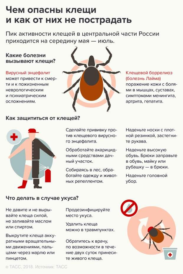 Регионы России, где вас, скорее всего, укусят на праздниках ynews, Роспотребнадзор, клещи, майские каникулы, укус клеща, энцефалит