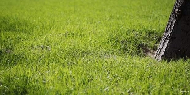 На Смольной коммунальщики «реанимируют» газон