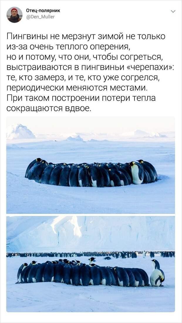 Веселые записки участника антарктической экспедиции